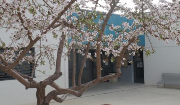 Surt a licitació el contracte de neteja de l'escola i d'edificis municipals