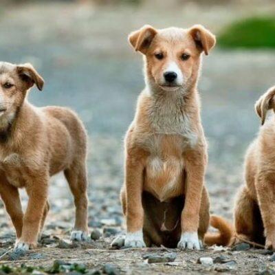 La Pobla de Montornès es declara 'Municipi lliure del maltractament animal'
